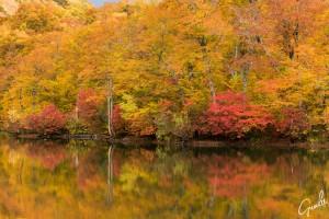 長野県小谷村の鎌池の紅葉 - 有名な撮影スポットの1つです。
