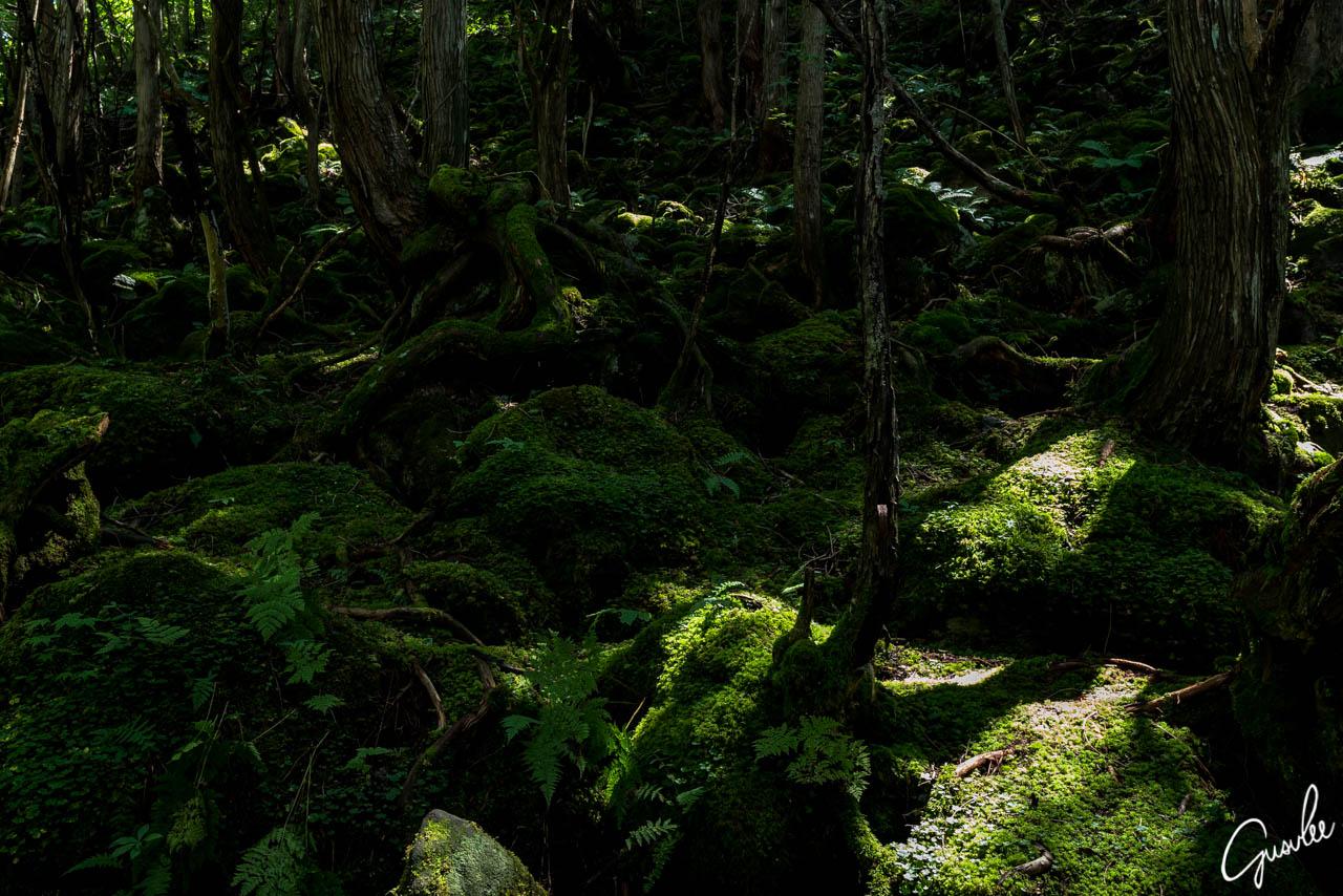 撮影スポットの蓼科大滝
