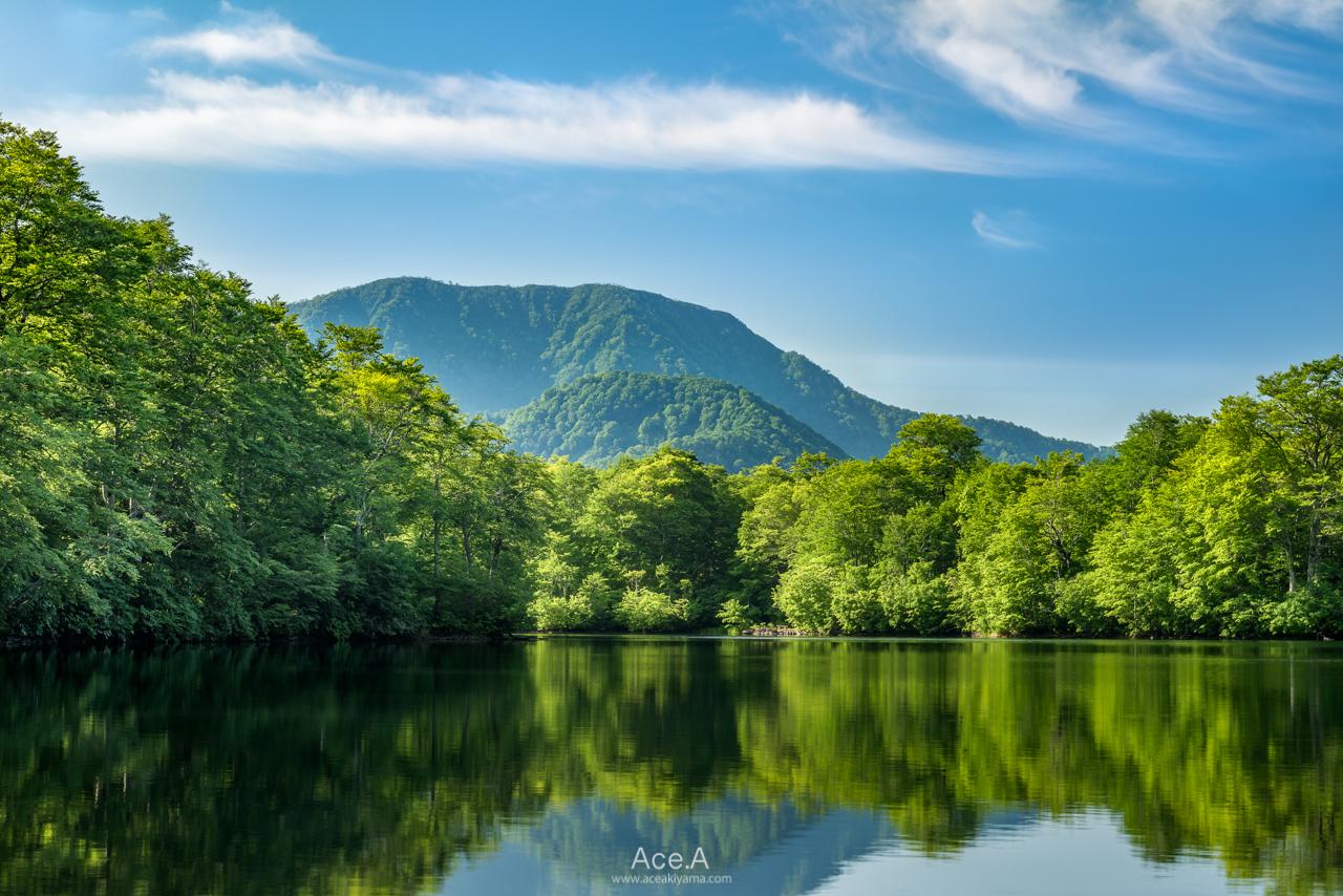 新緑の鎌池